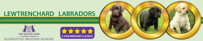 Welcome to Lewtrenchard Labradors